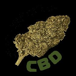 CBD Flower Buds